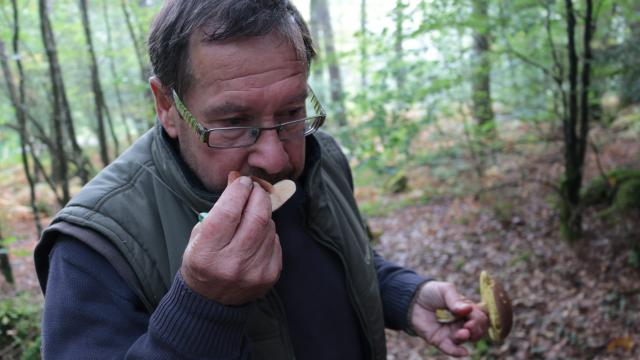 sniffer champignons