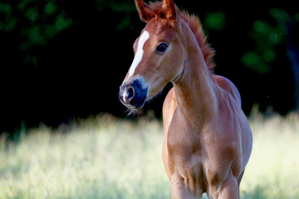 poney-choupi-open-range