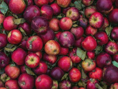 ma_recolte_bio-cueillette_pommes