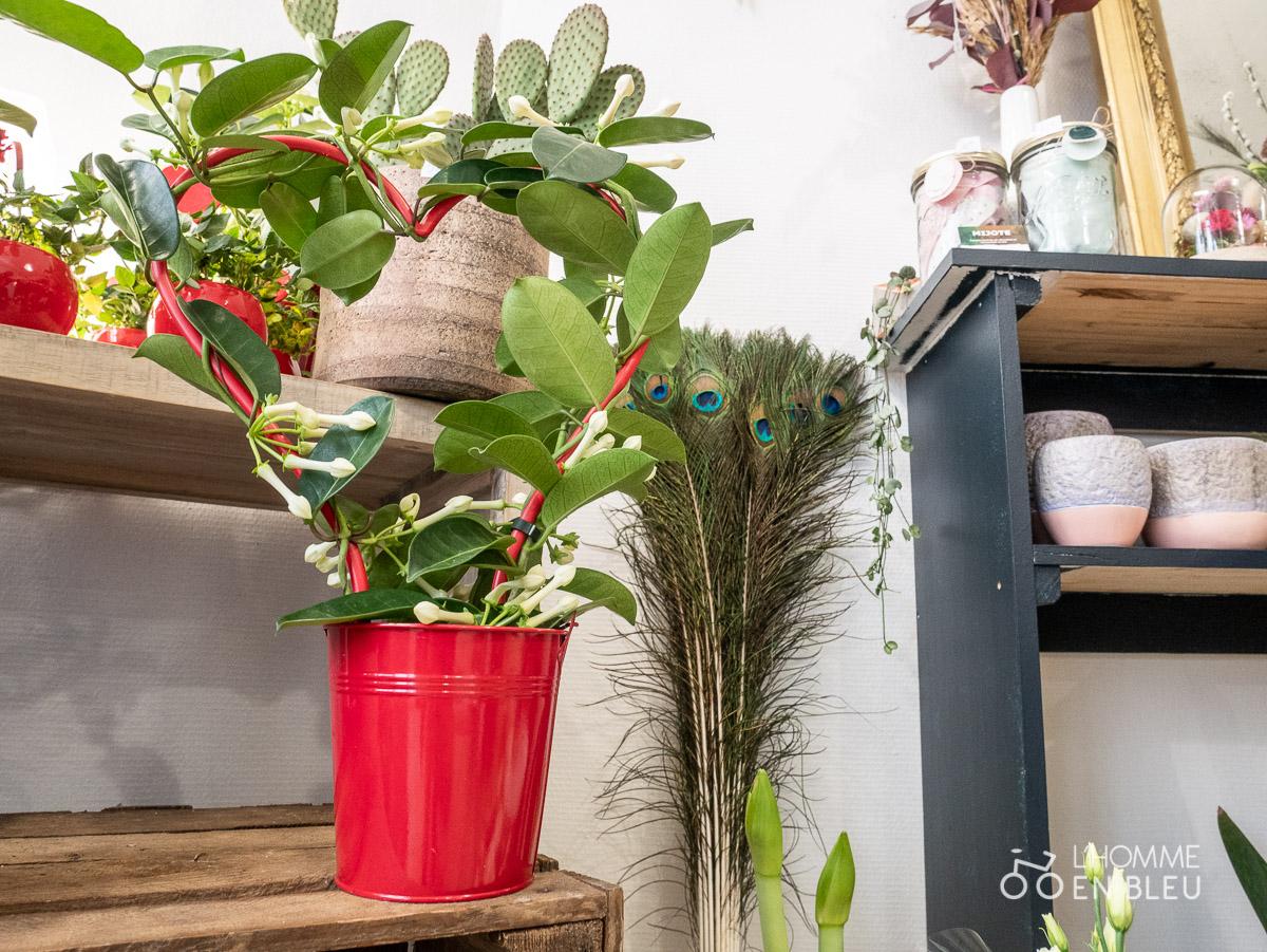 LB-Bergamote-fleurs-saison-saint-valentin-fleurs-pots