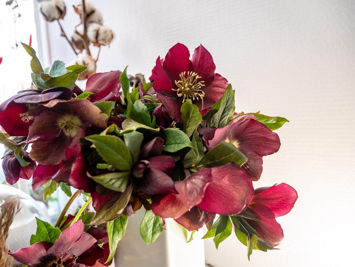 LB-Bergamote-fleurs-saison-saint-valentin-hellebores