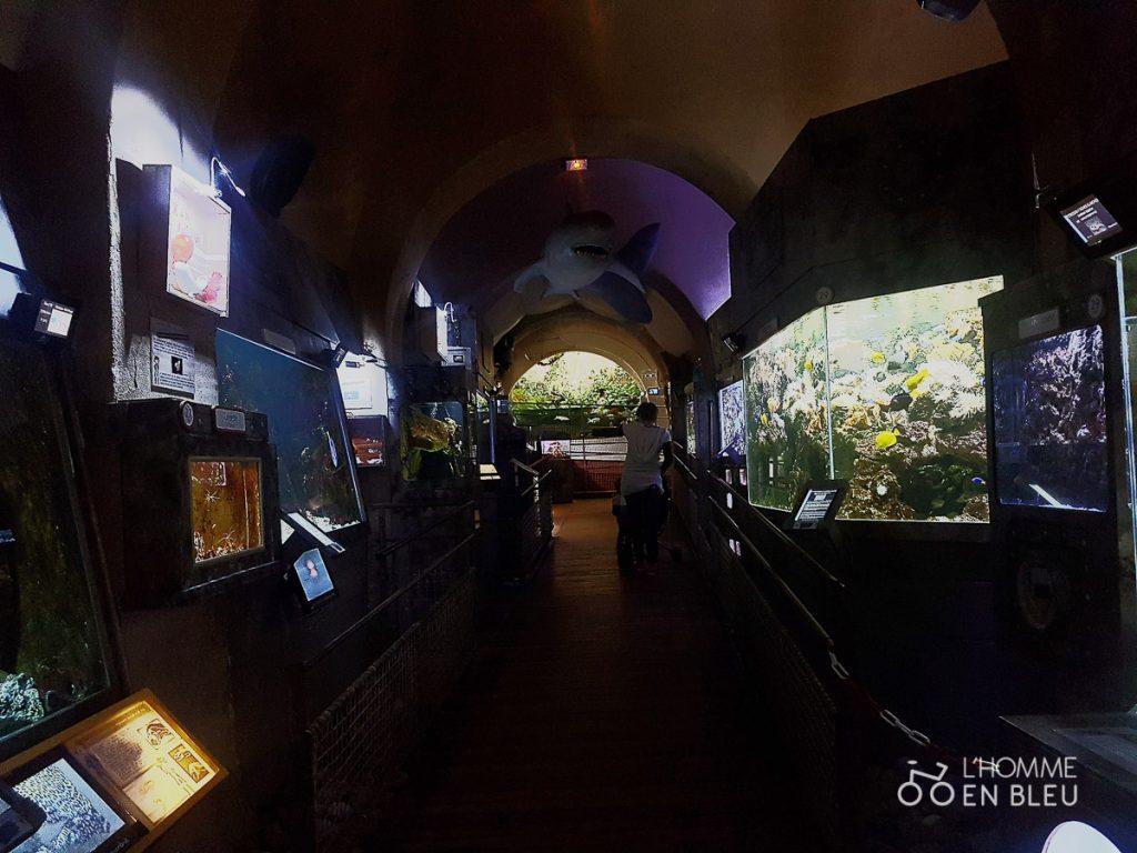 visite-aquarium-limoges-10