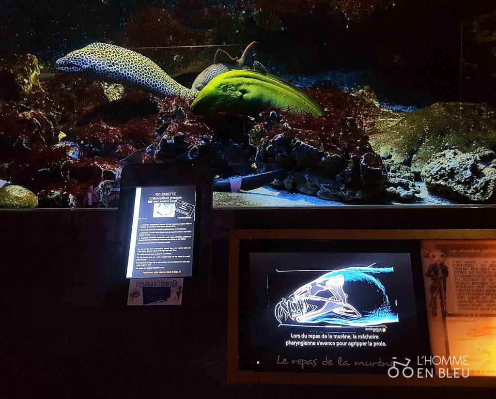 visite-aquarium-limoges-14