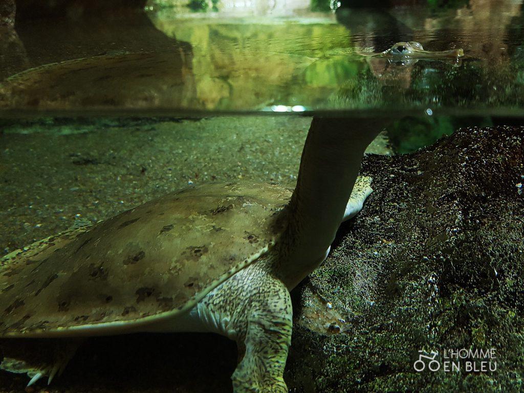 visite-aquarium-limoges-25