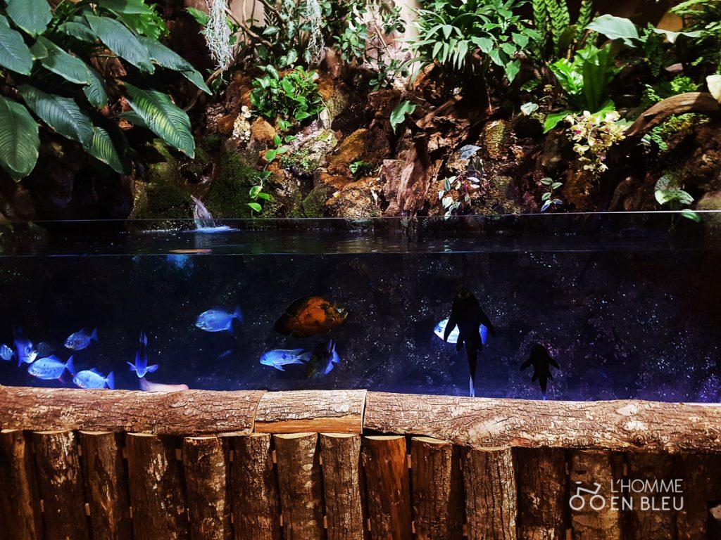 visite-aquarium-limoges-29
