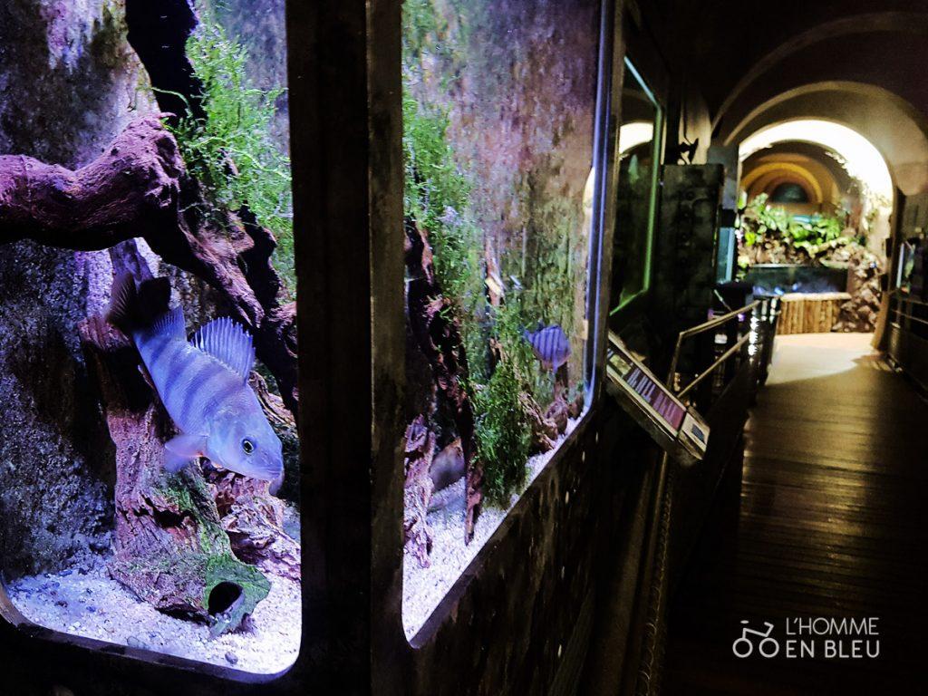 visite-aquarium-limoges-5