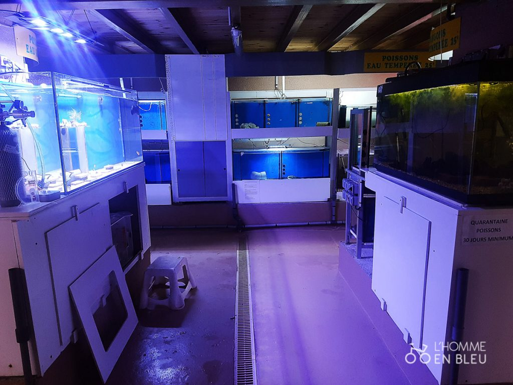 visite-aquarium-limoges-6