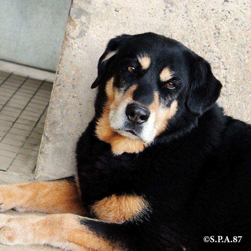 chiennoiretbeigespa87