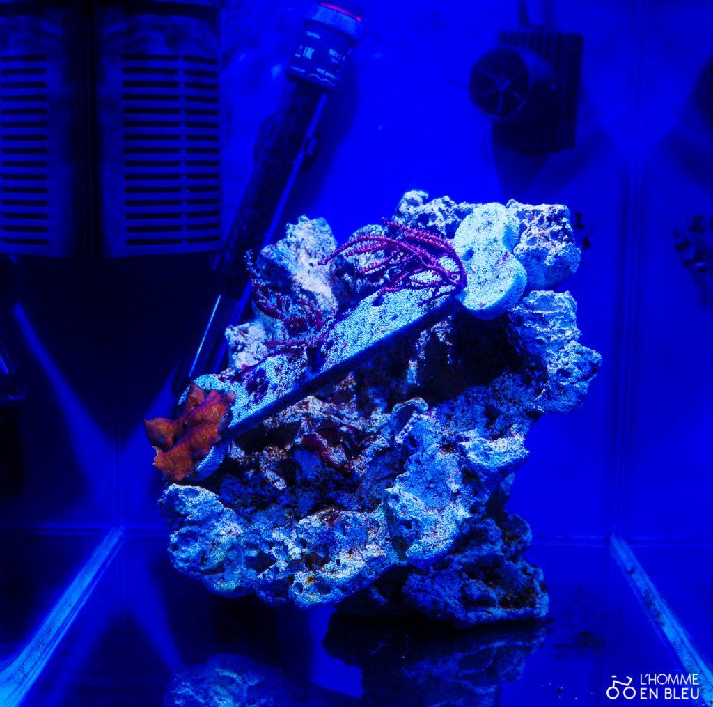 aquarium-expo-formes-vivantes
