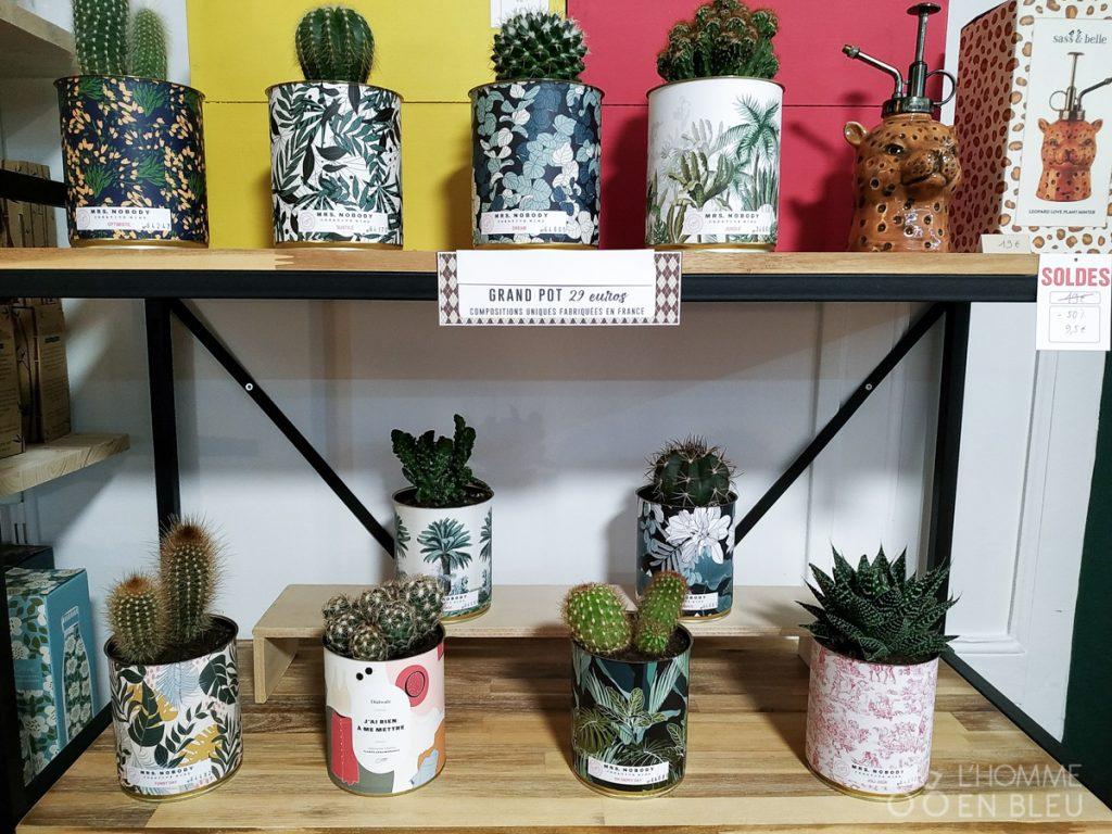 boogalou-cactus