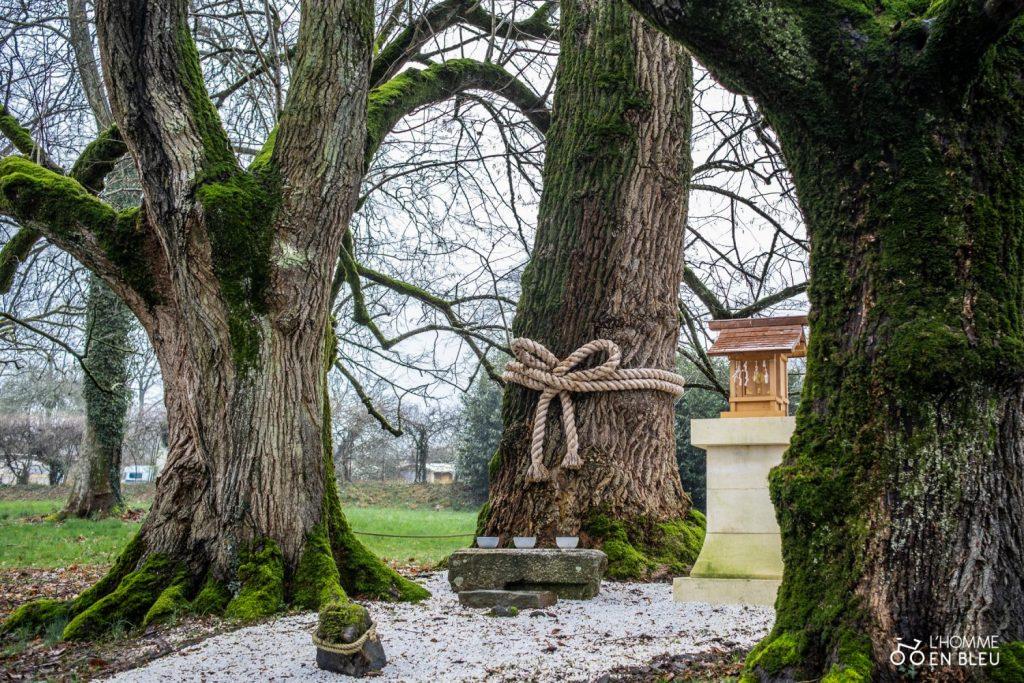 Dechen Choling arbres