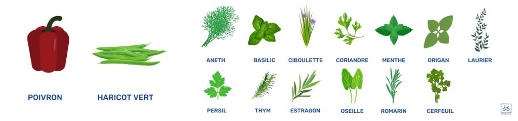 légumes-et-aromates-juin