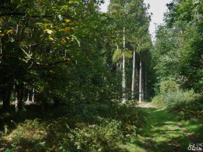 bannière arboretum