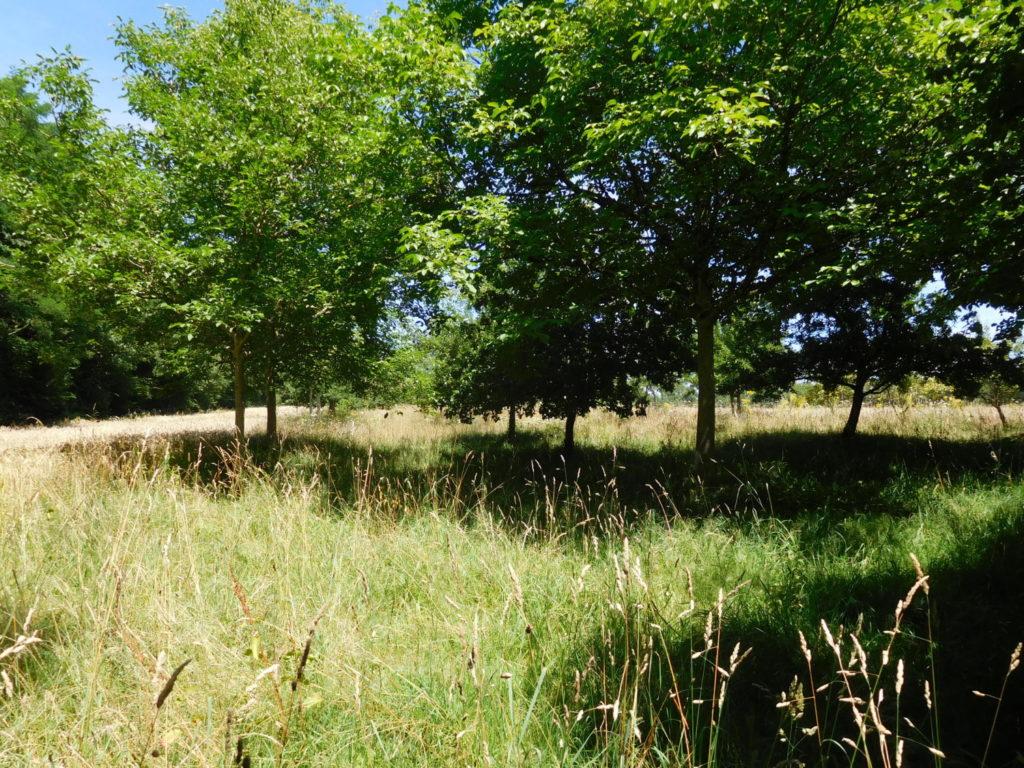 Verger hautes herbes été