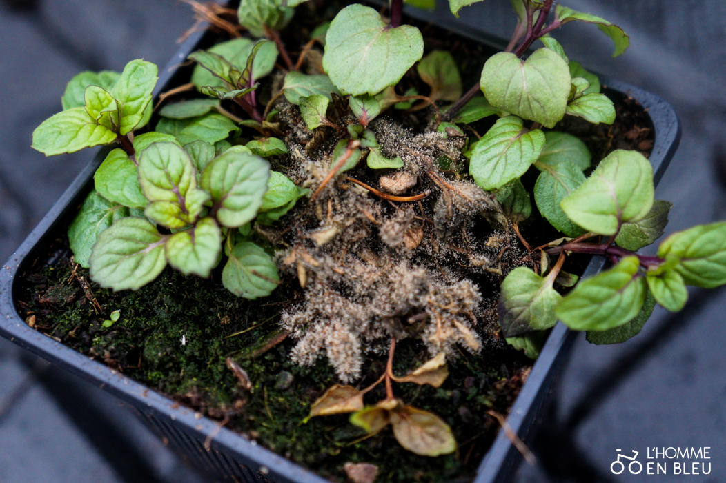 champignon-plante